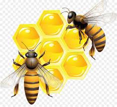 3/14/19 Town Board Meeting Guest Speaker Bee Keeper Dennis Remsburger